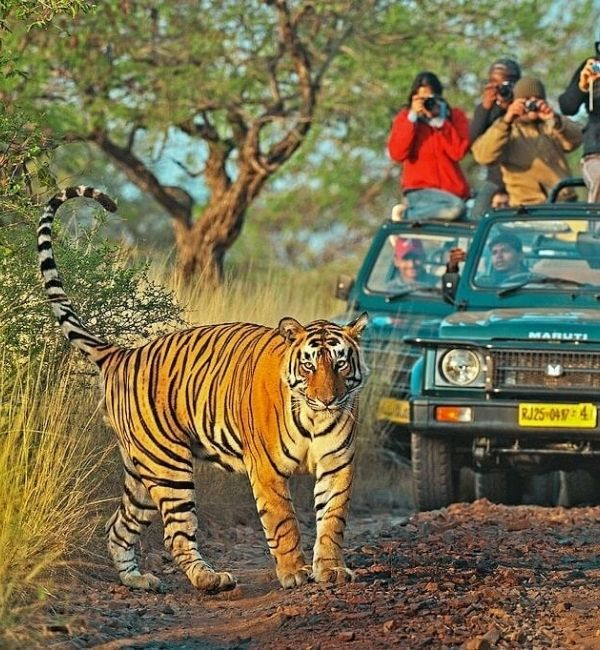 Ranthambore taxi service